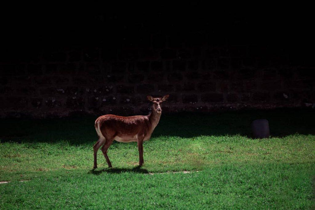 ciervo en el jardin de la taconera pamplona