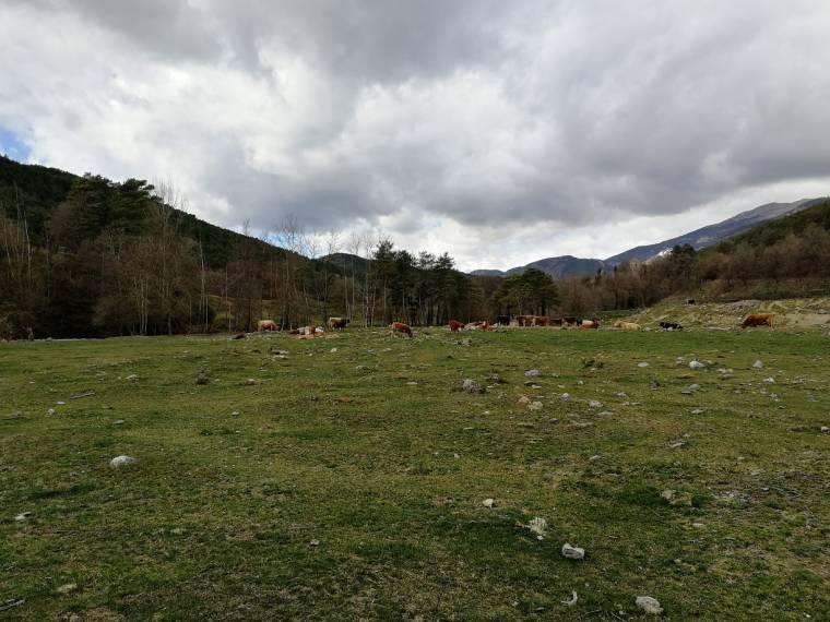 ruta 7 gorgs camino vacas