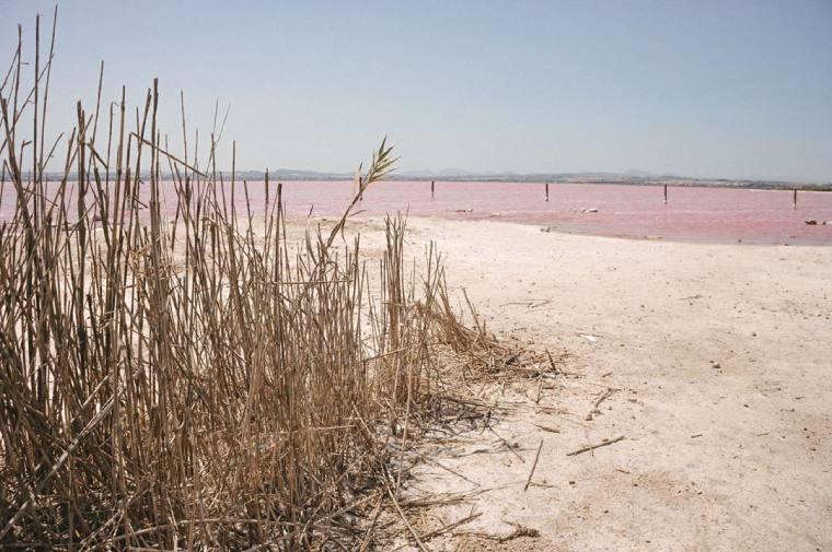 cañaveral laguna rosa